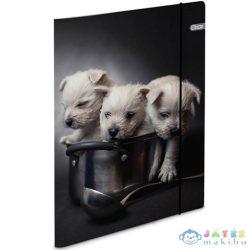 Spirit: Puppies Gumis Karton Mappa A4-Es 600G (Spirit, 408750)